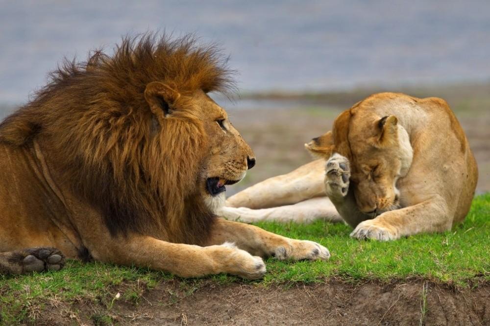 bestofnatgeo08 Лучшие снимки года от National Geographic