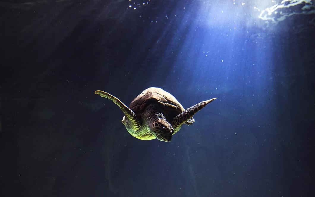 luchshie foto zhivotnyx nedeli v dekabre 11 Лучшие фотографии животных со всего мира за неделю