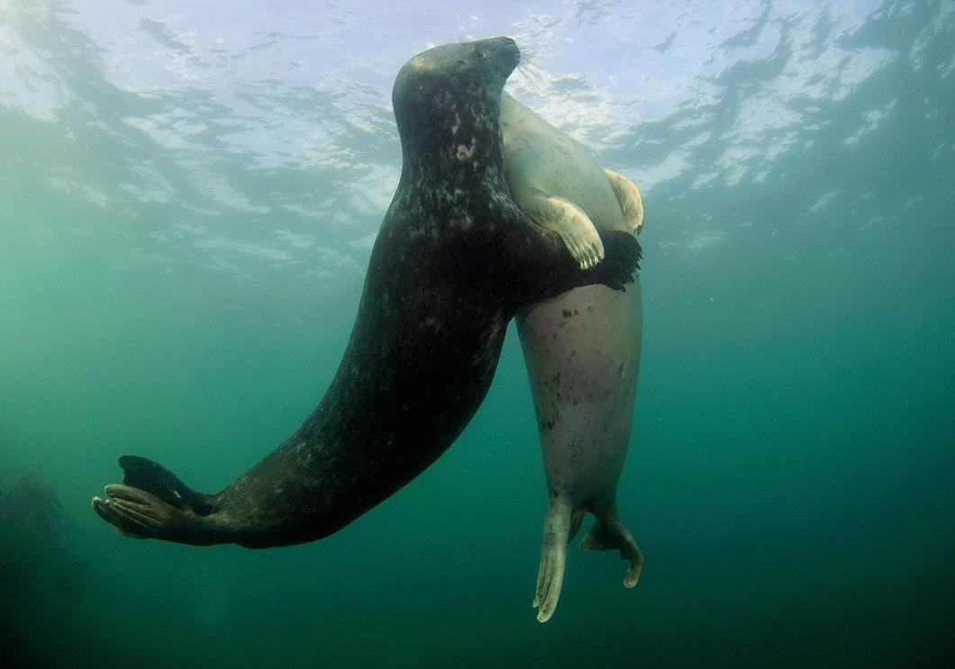 luchshie fotografii zhivotnyh 2014 goda 30 Лучшие фотографии животных 2014 года по версии Bigpicture.ru