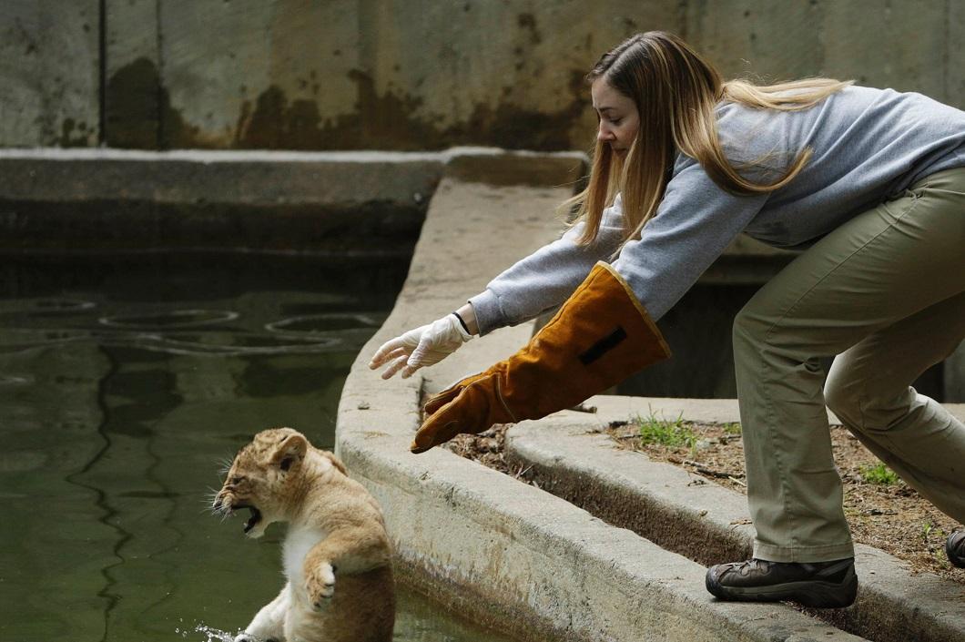 luchshie fotografii zhivotnyh 2014 goda 6.6 Лучшие фотографии животных 2014 года по версии Bigpicture.ru