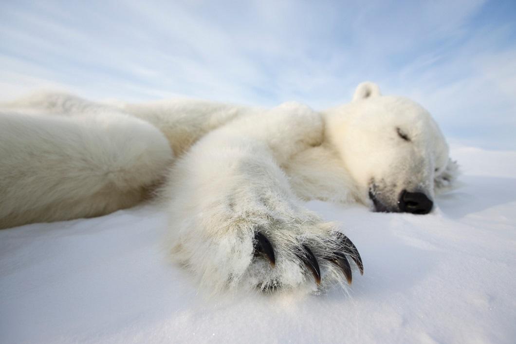 Лучшие фотографии животных 2014 года по версии Bigpicture.ru