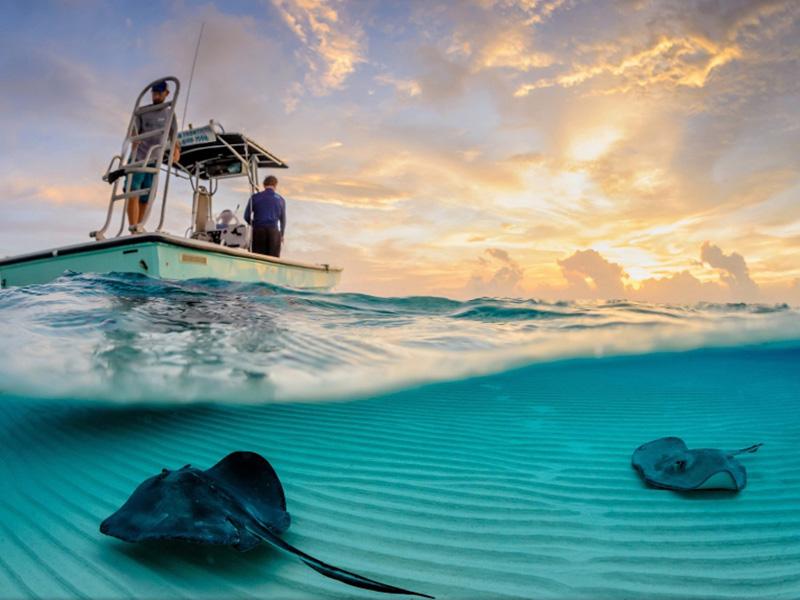 05 10 уникальных полуподводных фотографий
