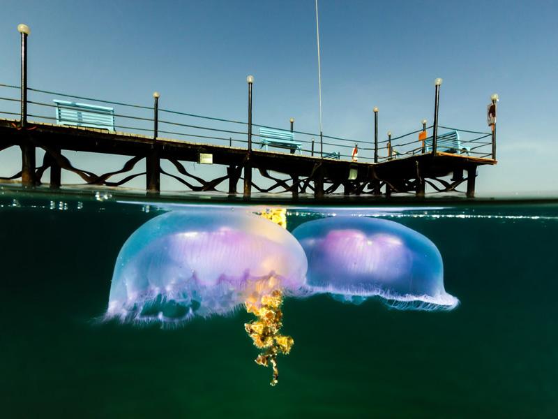 09 10 уникальных полуподводных фотографий