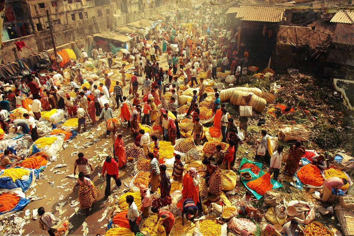 Calcutta k08 За что я люблю Калькутту: Мать Тереза, золотое дерево и рикши прямоходячие