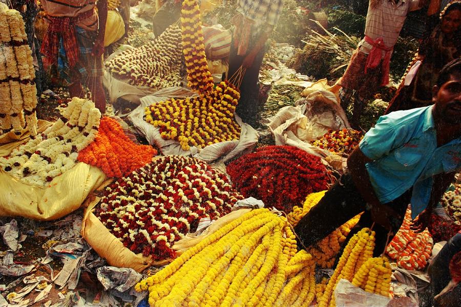 Calcutta k11 За что я люблю Калькутту: Мать Тереза, золотое дерево и рикши прямоходячие
