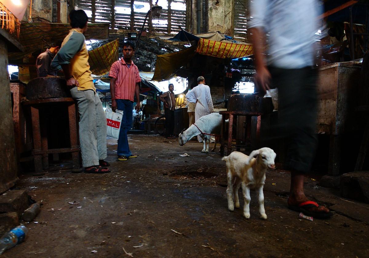 Calcutta k35 За что я люблю Калькутту: Мать Тереза, золотое дерево и рикши прямоходячие