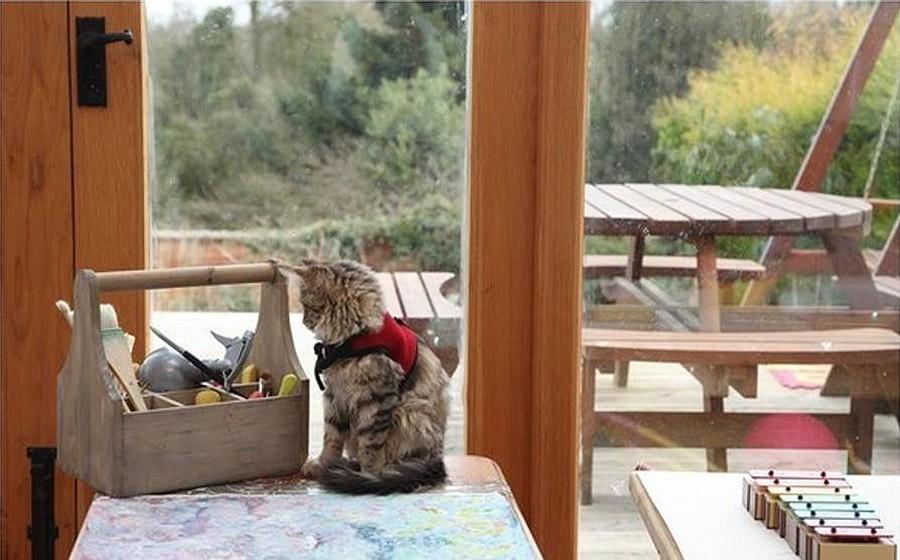 IrisandThula11 Как кошка Тула помогает девочке с аутизмом