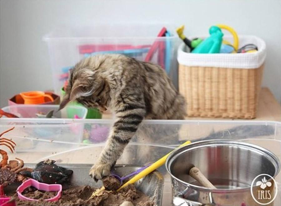 IrisandThula15 Как кошка Тула помогает девочке с аутизмом