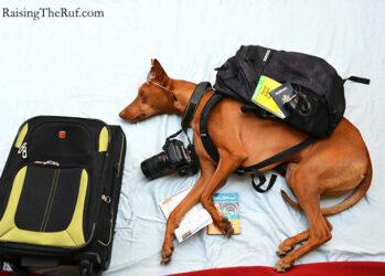 4. Рюкзак собран, пора в путь!
