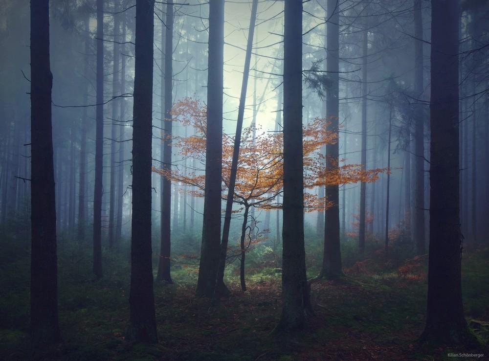 Удивительные пейзажи, вдохновленные сказками братьев Гримм Schonberger12