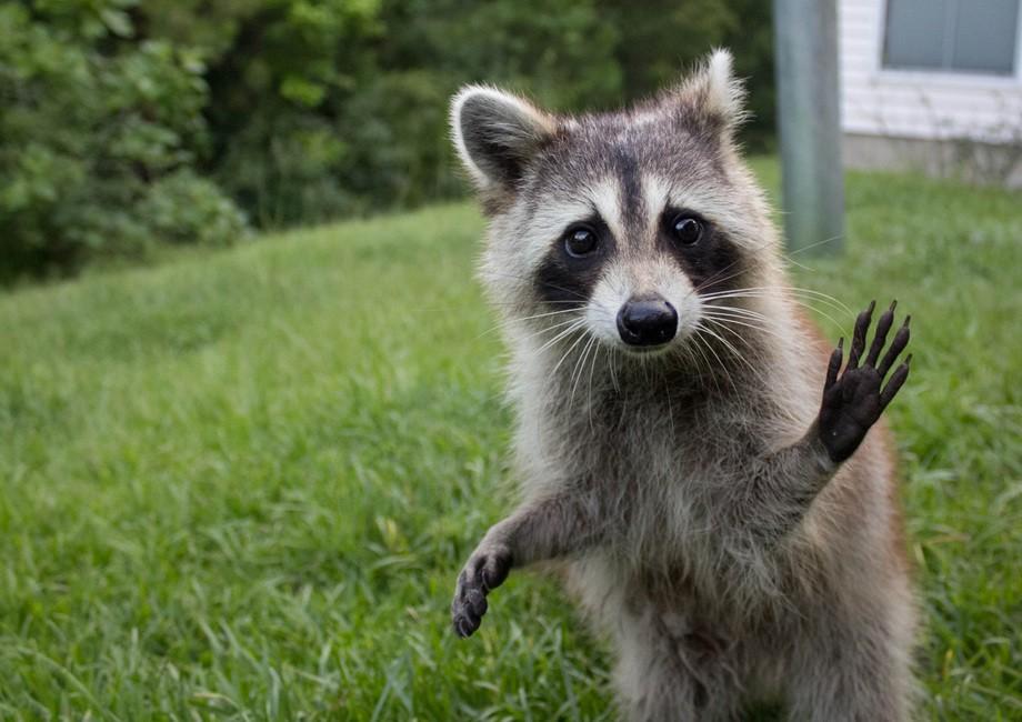animalcuties01 25 животных мастеров, которые «разведут» вас на печеньки