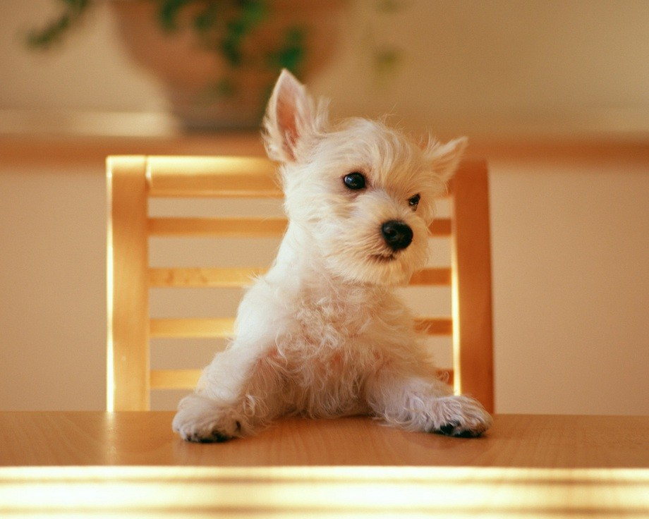 animalcuties04 25 животных мастеров, которые «разведут» вас на печеньки