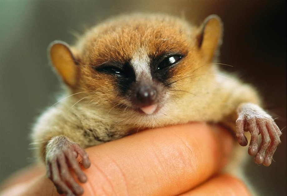 animalcuties07 25 животных мастеров, которые «разведут» вас на печеньки