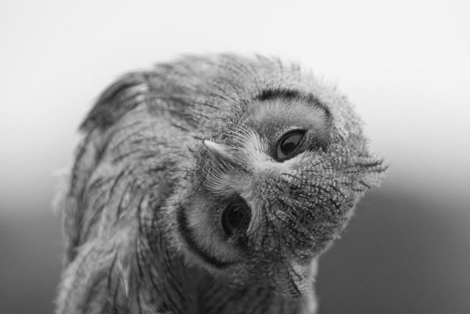 animalcuties10 25 животных мастеров, которые «разведут» вас на печеньки