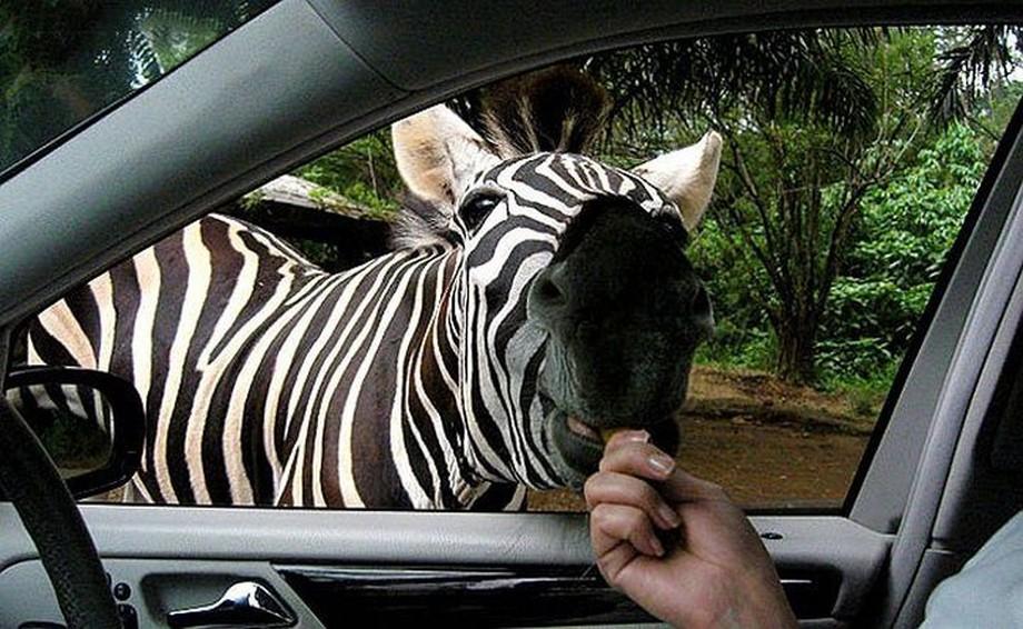 animalcuties17 25 животных мастеров, которые «разведут» вас на печеньки