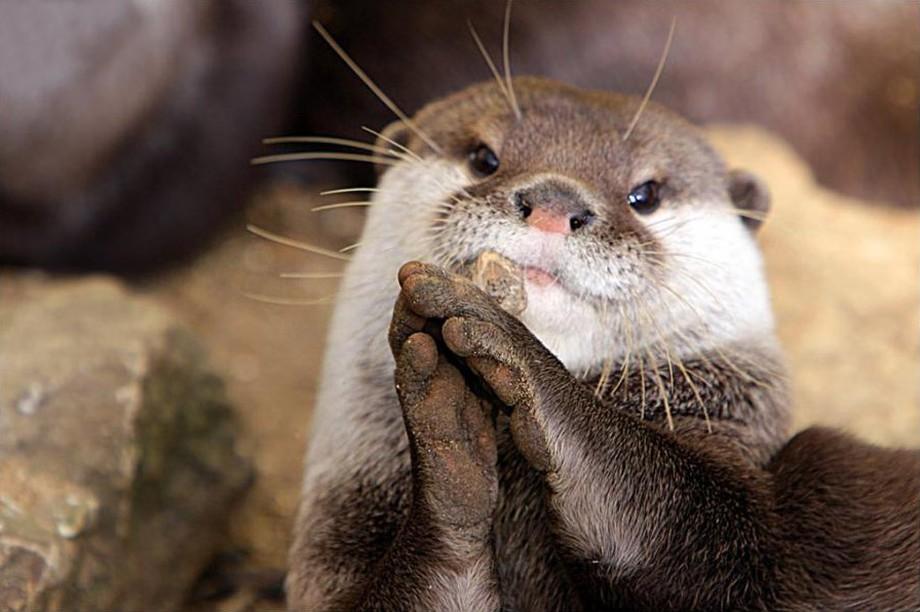 animalcuties19 25 животных мастеров, которые «разведут» вас на печеньки