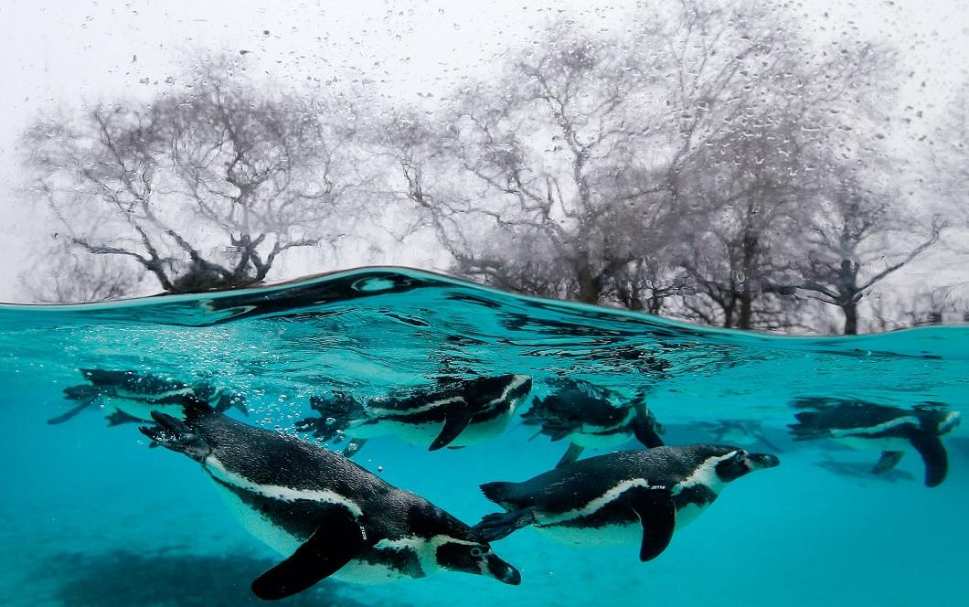 luchshie foto zhivotnyh za 2 nedelyu yanvarya 1 Лучшие фотографии животных со всего мира за неделю