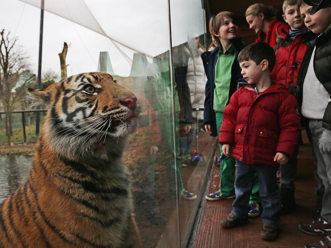 luchshie foto zhivotnyh za 2 nedelyu yanvarya 2 Лучшие фотографии животных со всего мира за неделю