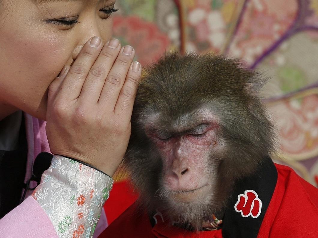 luchshie foto zhivotnyh za 2 nedelyu yanvarya 21 Лучшие фотографии животных со всего мира за неделю