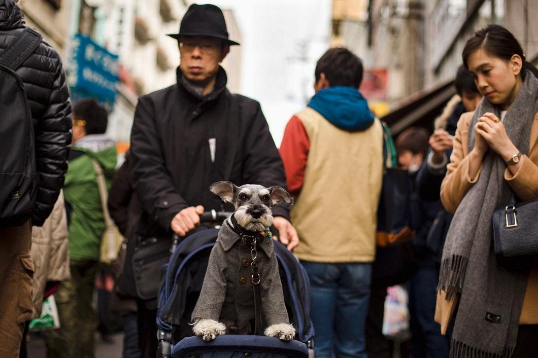 luchshie foto zhivotnyh za 2 nedelyu yanvarya 5 Лучшие фотографии животных со всего мира за неделю