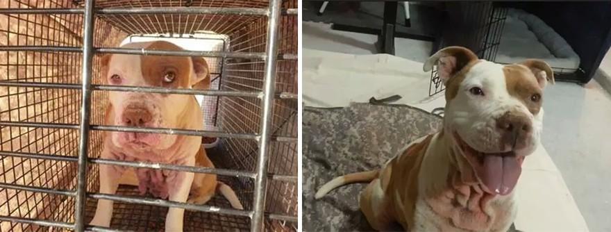 Petadoption05 животные до и после того как