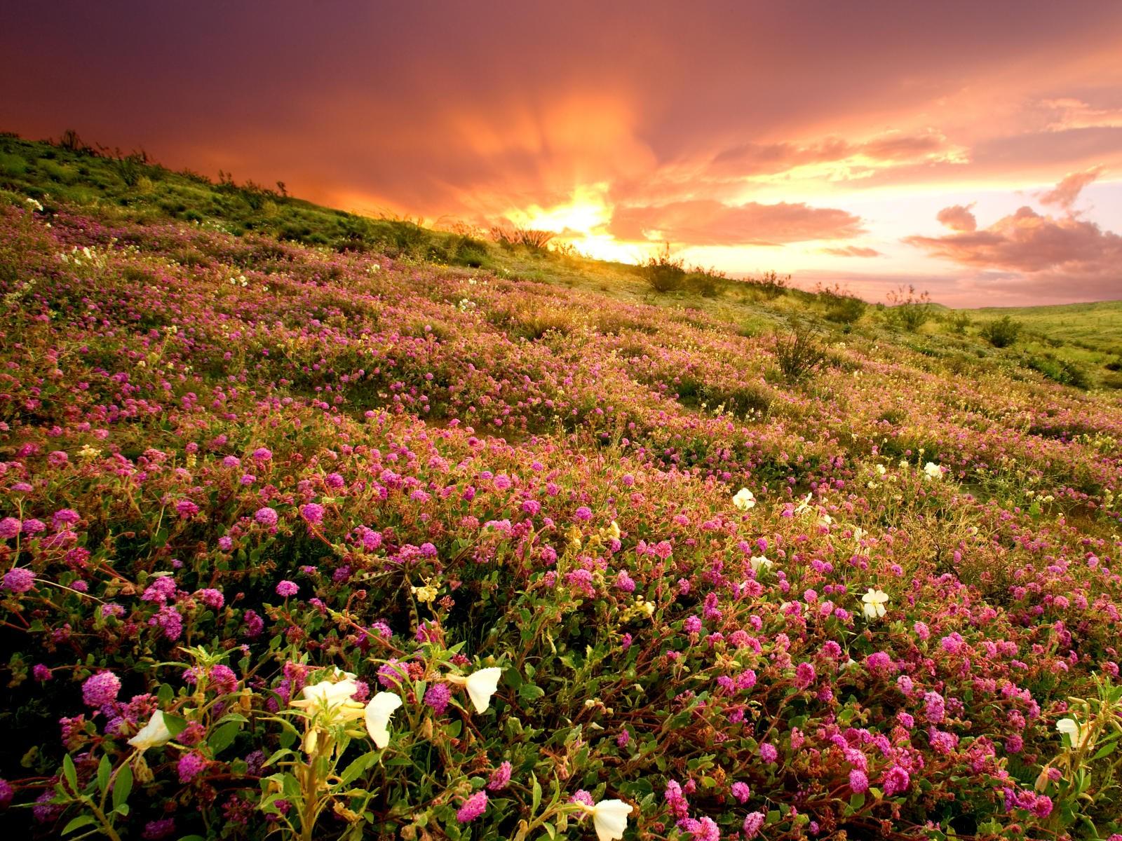 В Национальном парке Анза-Боррего, площадь которого более 2,4 тысячи кв. км, большую часть территории занимает безжизненная пустынная местность. Однако после зимнего сезона дождей сухая земля оживает, покрывается яркими цветами и сочной травой.