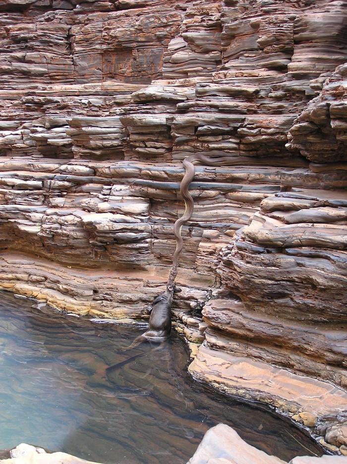 Australia13 Австралия: смертельный континент