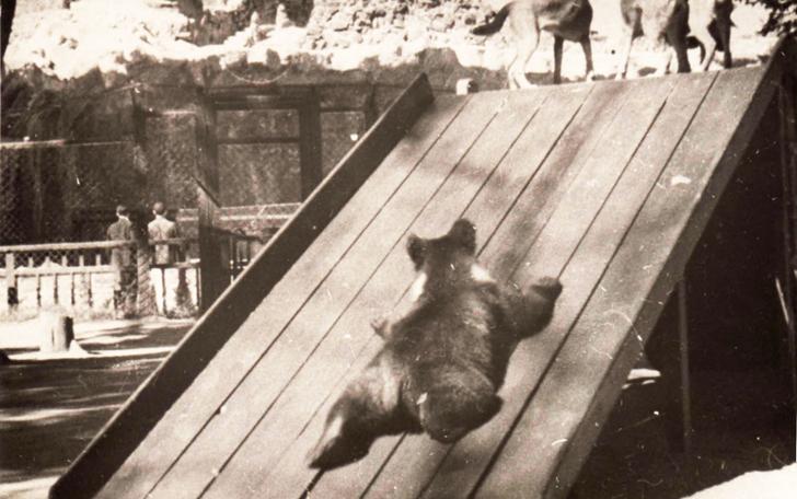 Детки в клетке: 153 года Московскому зоопарку