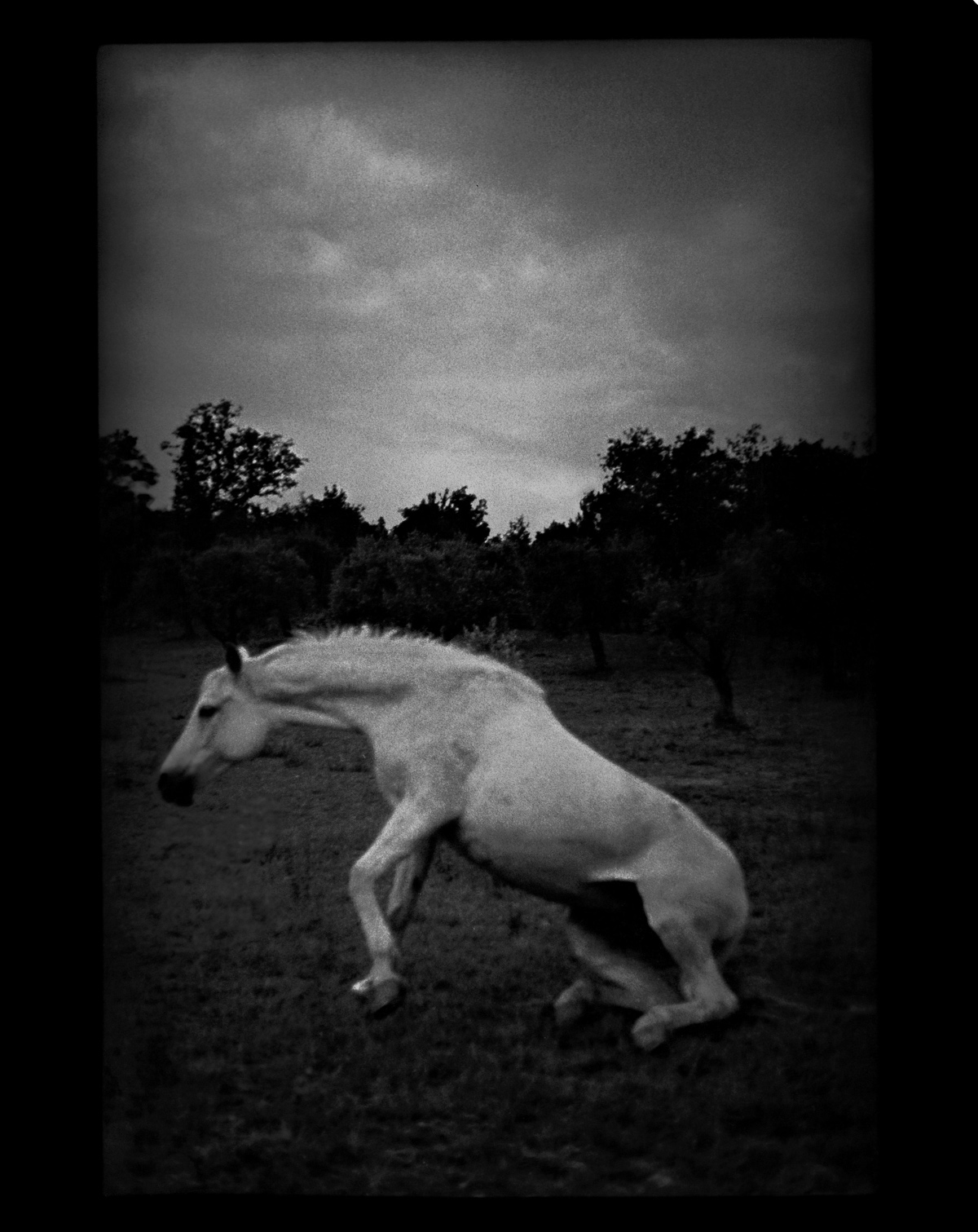 rexfeatures 4452120a Психологический портрет: неожиданные образы животных