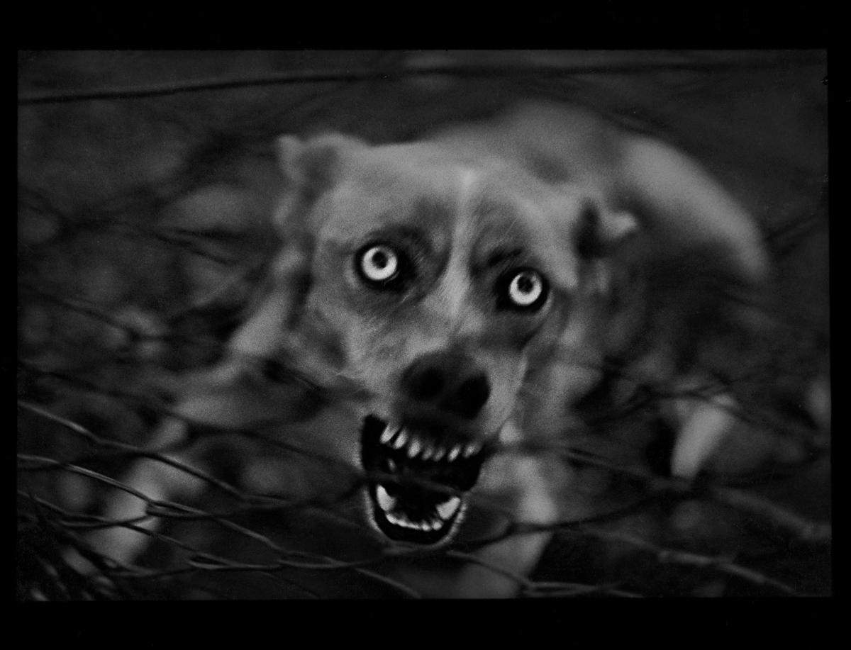 rexfeatures 4452120c Психологический портрет: неожиданные образы животных