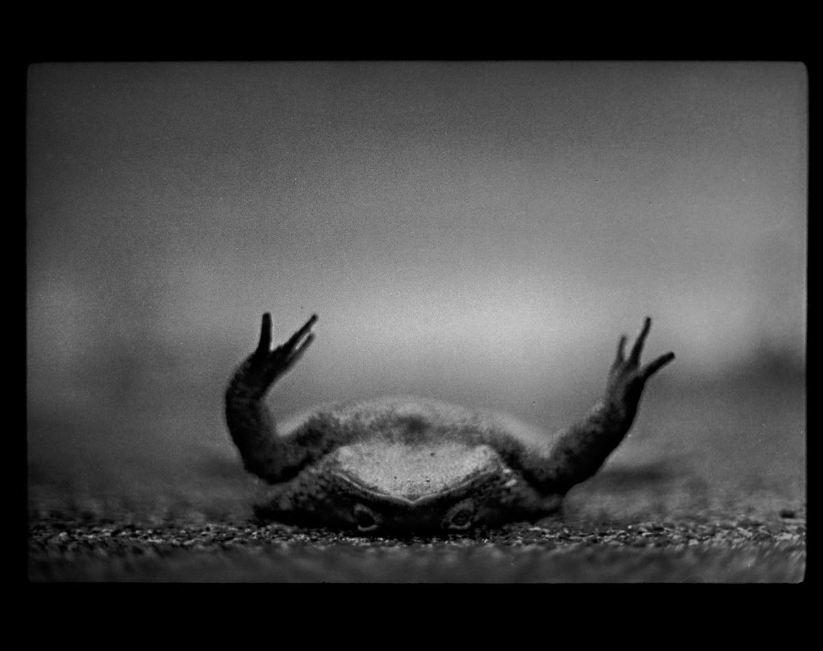 rexfeatures 4452120e Психологический портрет: неожиданные образы животных