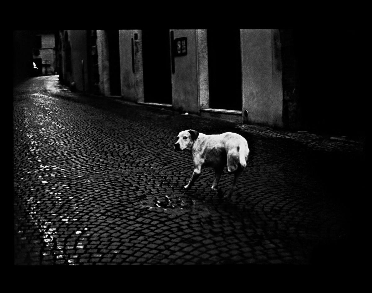 rexfeatures 4452120h Психологический портрет: неожиданные образы животных