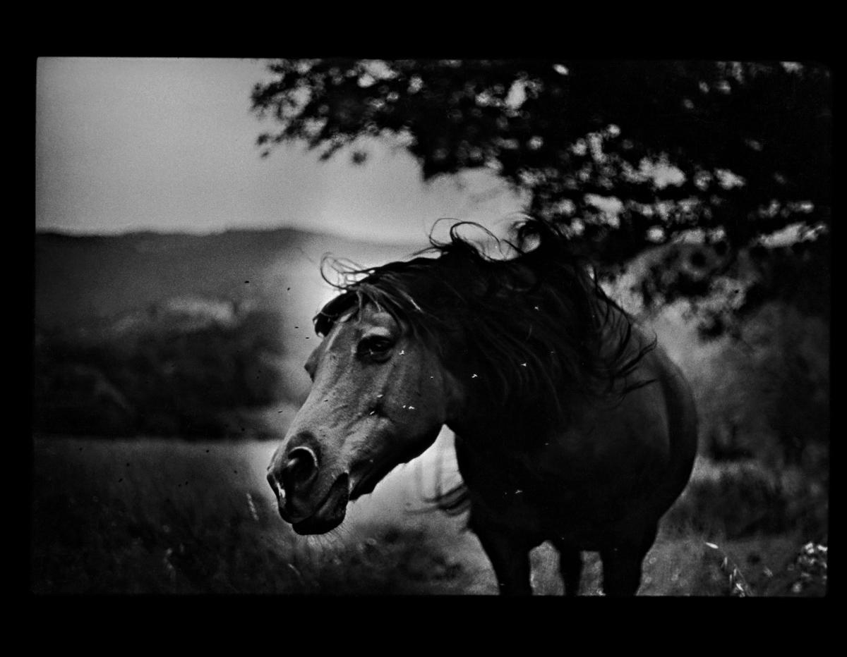 rexfeatures 4452120i Психологический портрет: неожиданные образы животных