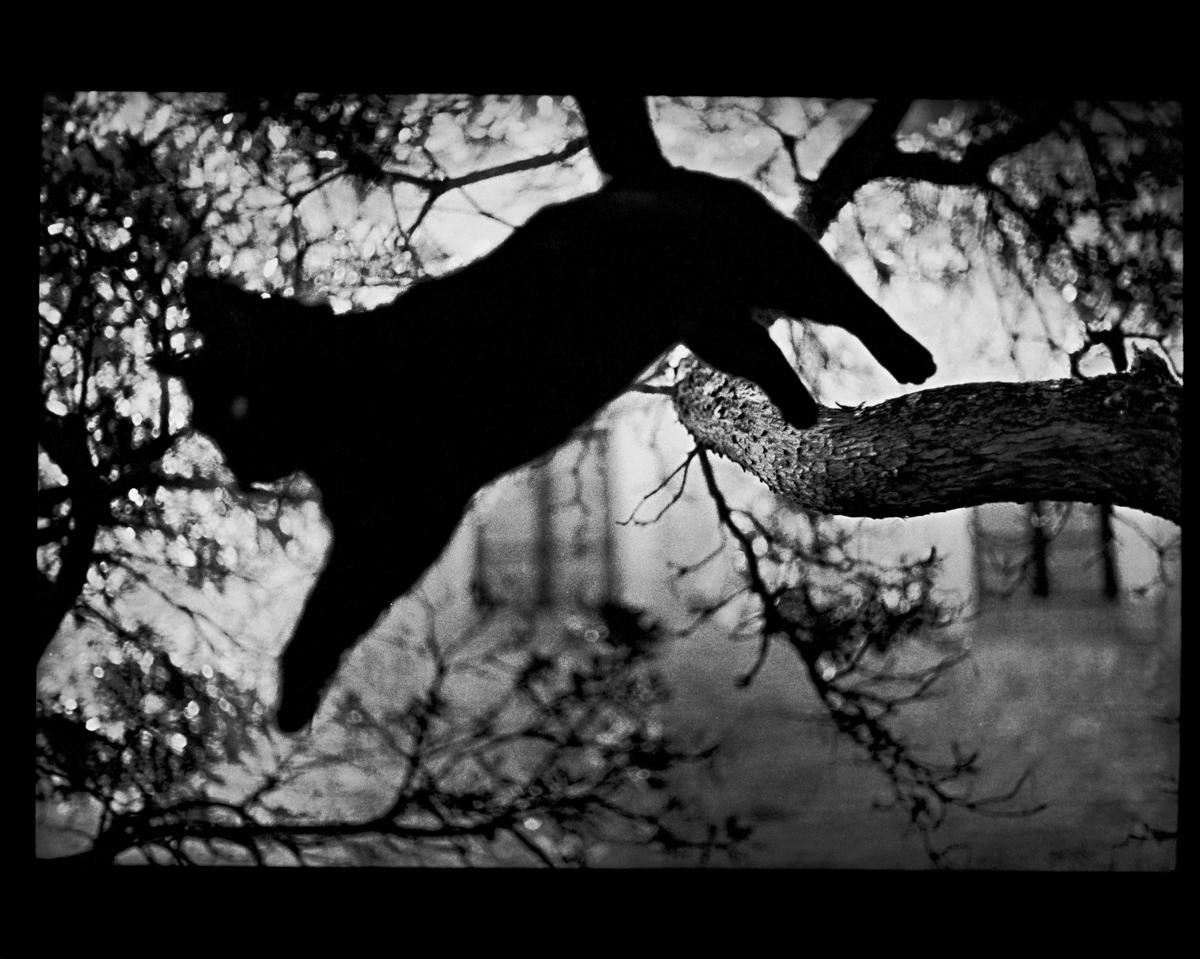 rexfeatures 4452120l Психологический портрет: неожиданные образы животных