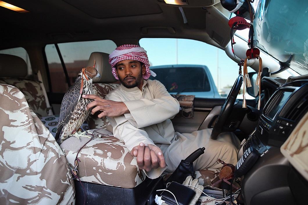 sokolinaya oxota v oae 1 Соколиная охота в Арабских Эмиратах