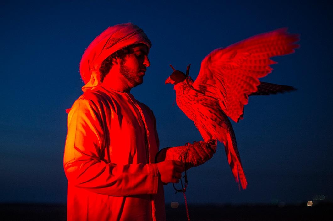 sokolinaya oxota v oae 16 Соколиная охота в Арабских Эмиратах