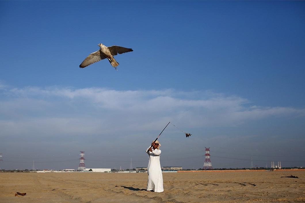 sokolinaya oxota v oae 5 Соколиная охота в Арабских Эмиратах