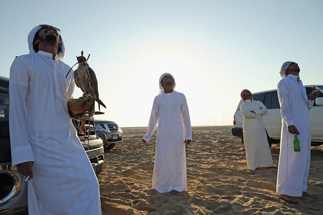 sokolinaya oxota v oae 7 Соколиная охота в Арабских Эмиратах