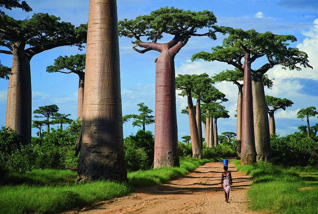 trees01 Самые красивые деревья в мире