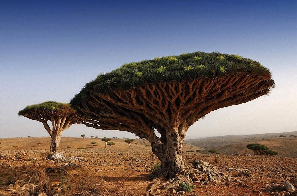 trees02 Самые красивые деревья в мире