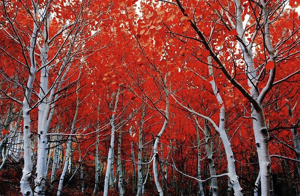 trees03 Самые красивые деревья в мире