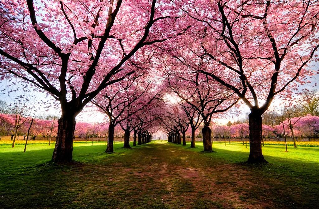 trees04 Самые красивые деревья в мире