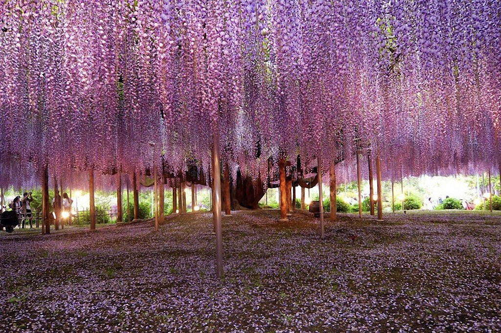 trees07 Самые красивые деревья в мире