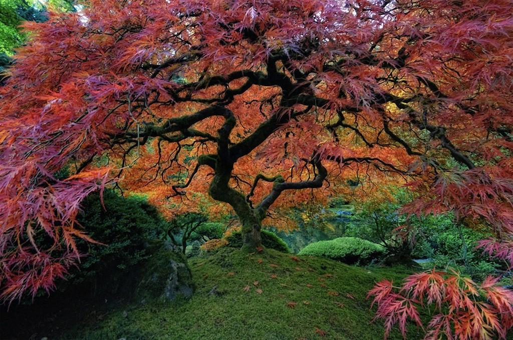 trees08 Самые красивые деревья в мире