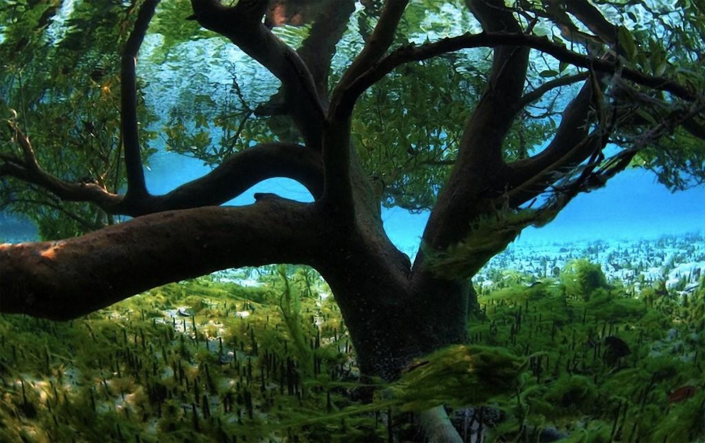 trees09 Самые красивые деревья в мире