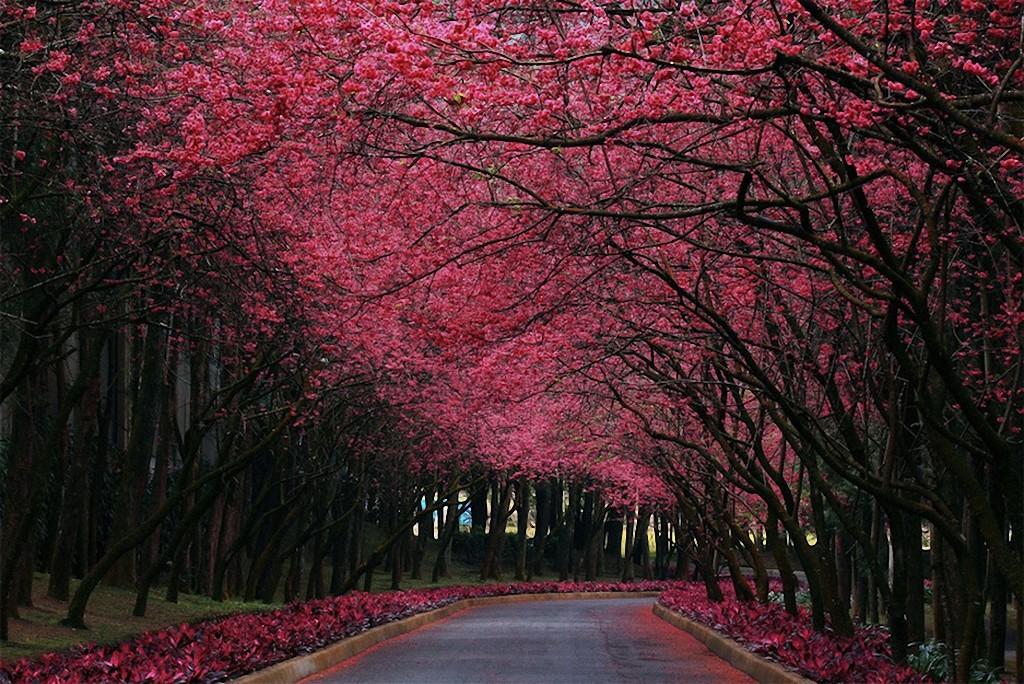 trees10 Самые красивые деревья в мире
