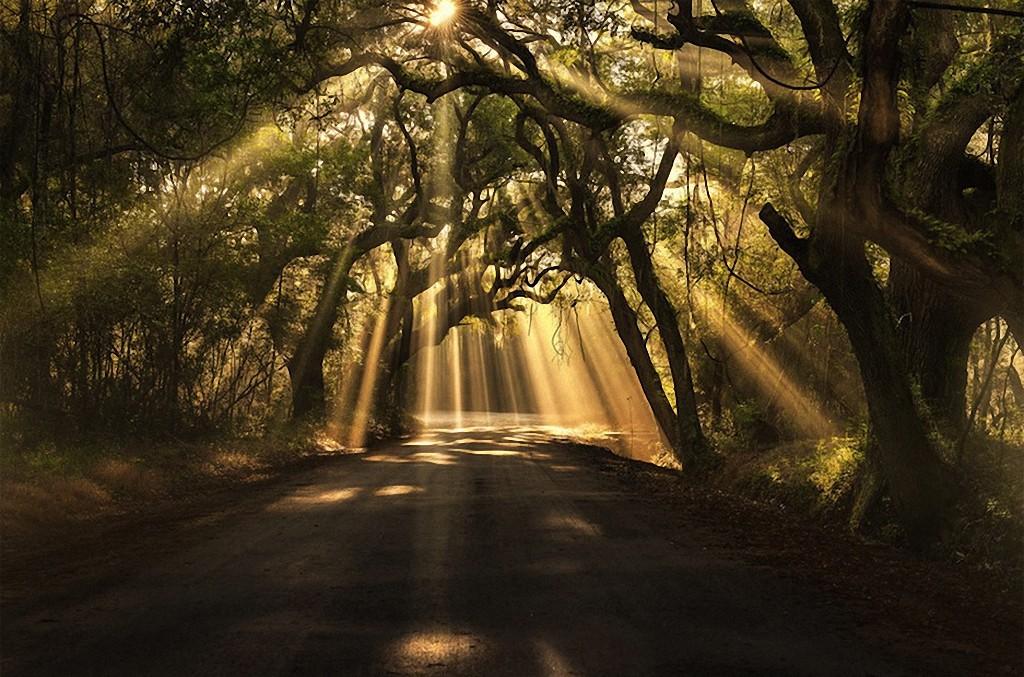 trees11 Самые красивые деревья в мире
