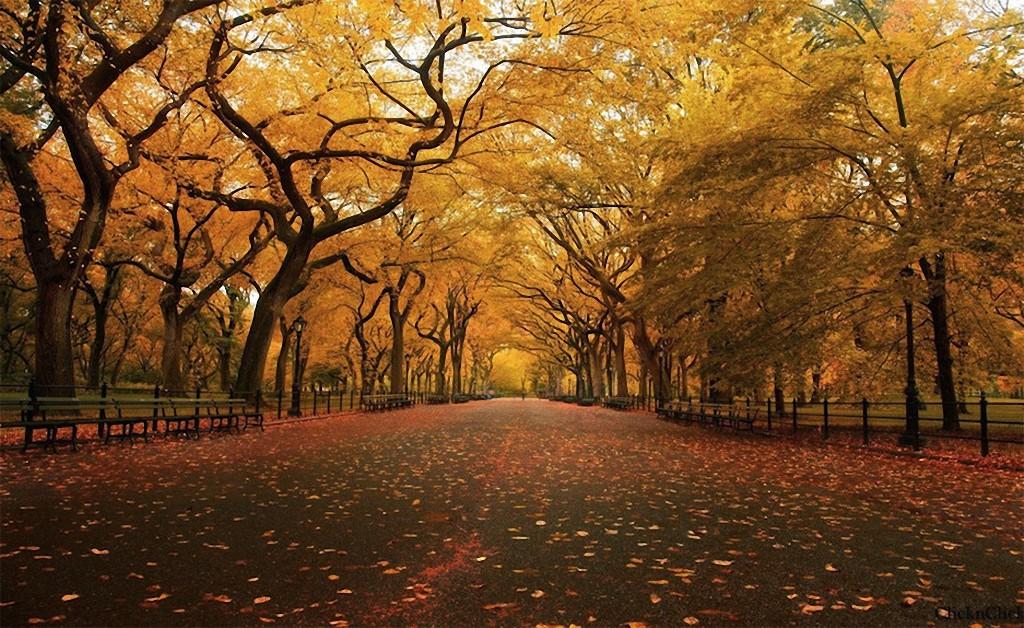 trees12 Самые красивые деревья в мире