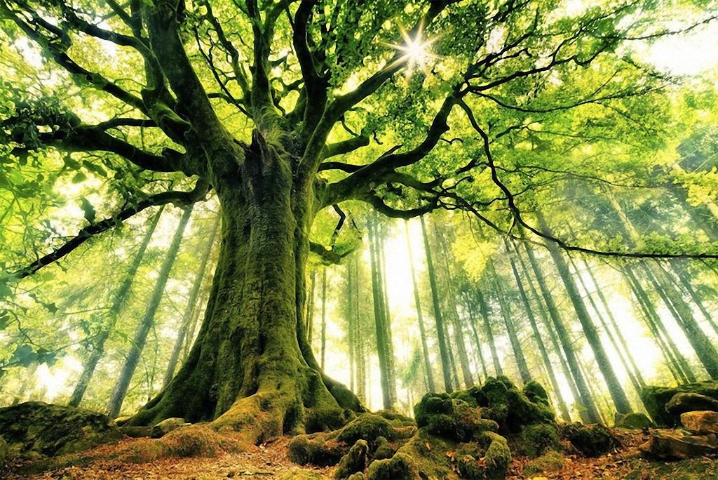 trees13 Самые красивые деревья в мире