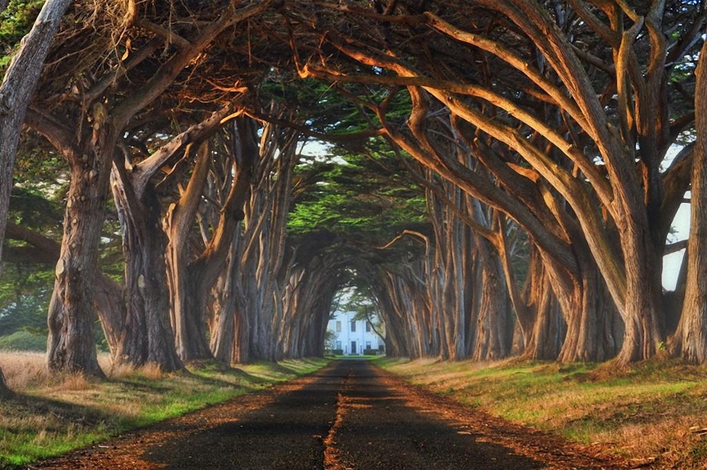 trees14 Самые красивые деревья в мире